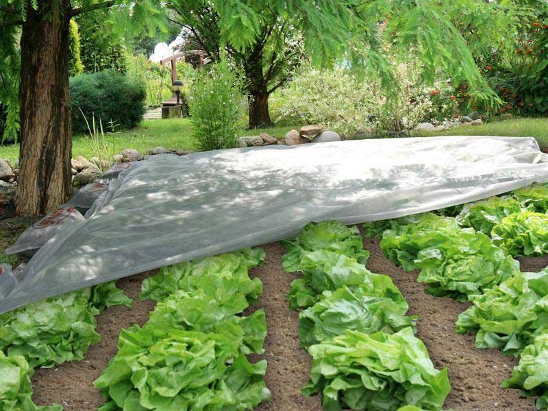 Агроволокно - современный материал