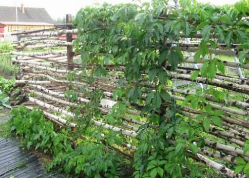 Способы декорирования изгородей