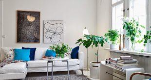 interieurtips-kamerplant[1]