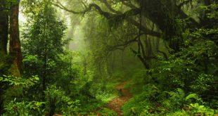 nature-876__1490262678__300h