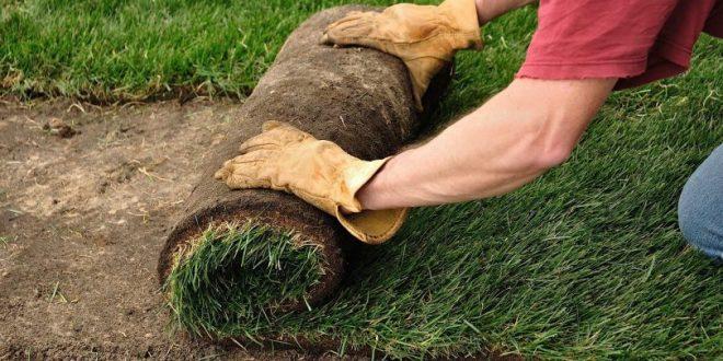 Особенности выращивания газонного рулона