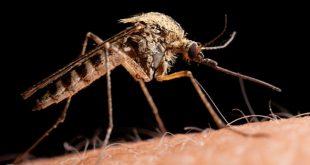 lovushki-nasekomyx-bona-spasenie-ot-komarov-mux-i-moshek-3
