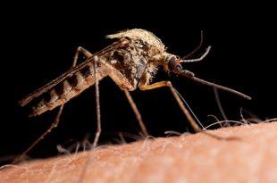 lovushki nasekomyx bona spasenie ot komarov mux i moshek 3